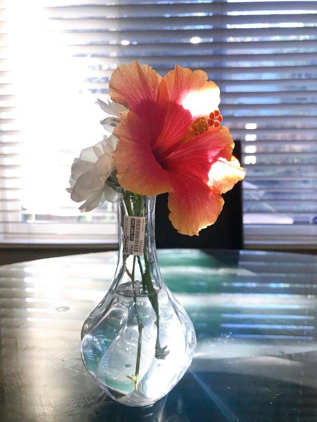$0.99的小花瓶,你值得拥有