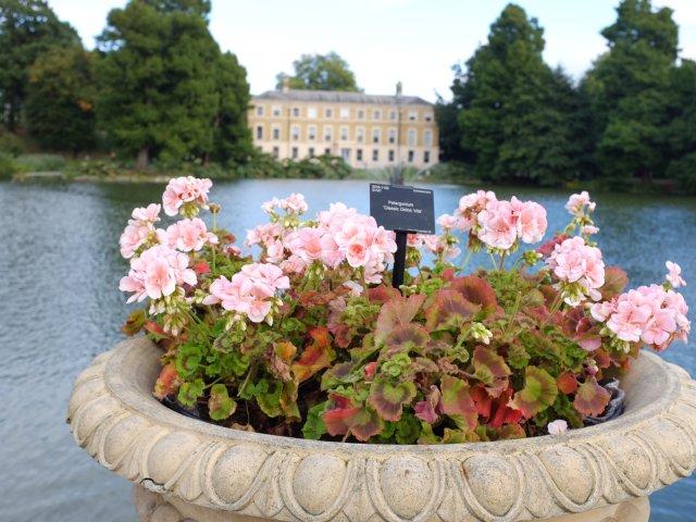 Qew Garden: 伦敦皇家植...