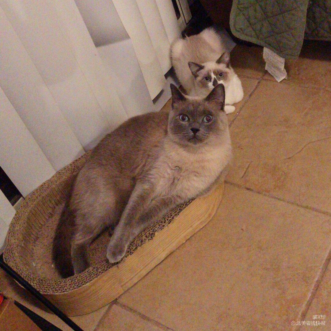 超级down的周末有猫主子们的陪伴