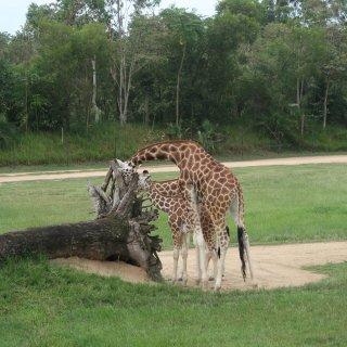 Australia Zoo 超可爱动物园...