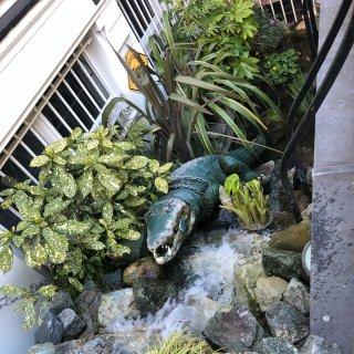 伦敦Lacoste商店,超可爱鳄鱼池...