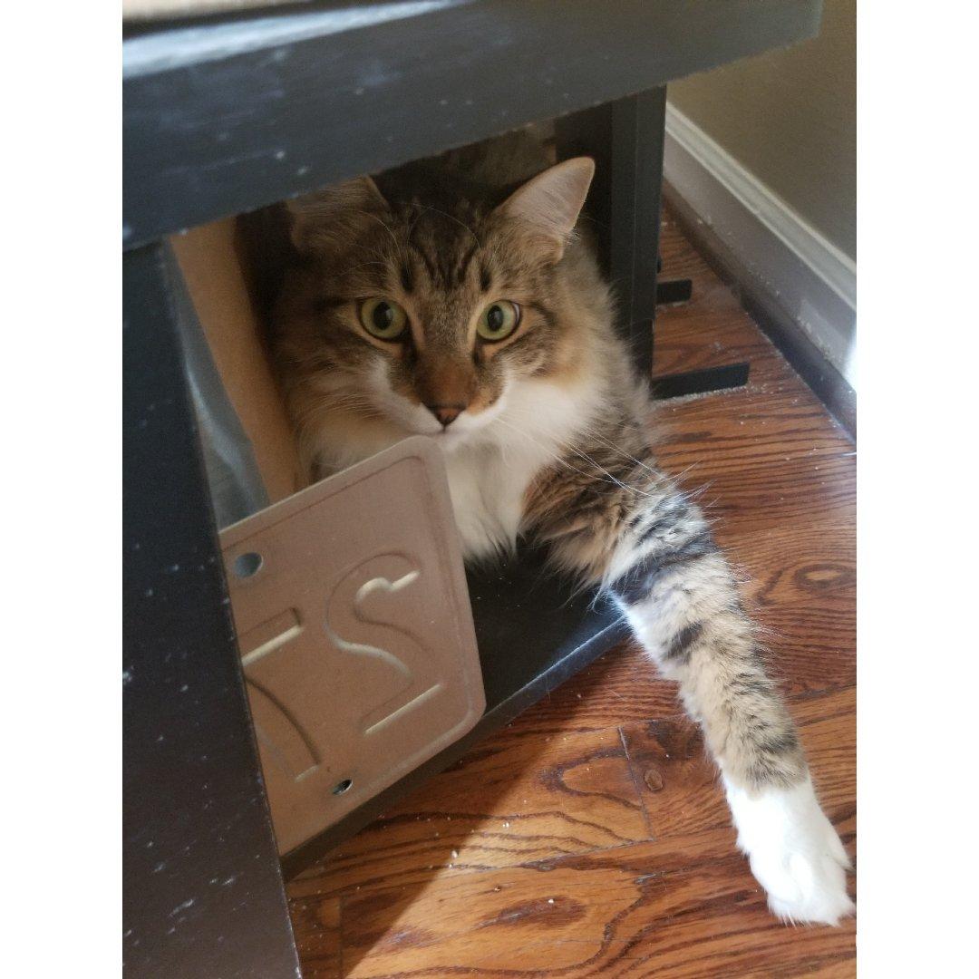 养猫小日常:弟弟的新据点