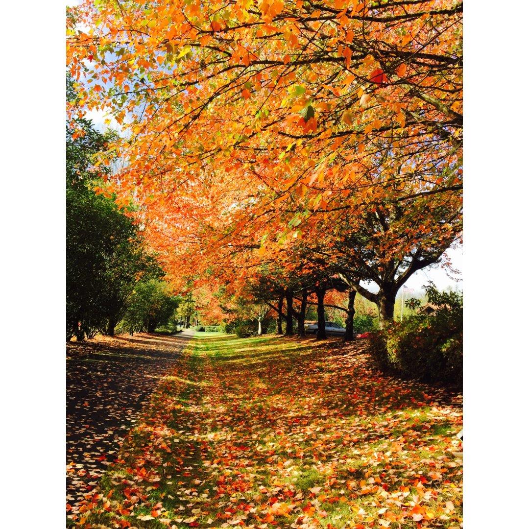 波特兰的雨季和秋天