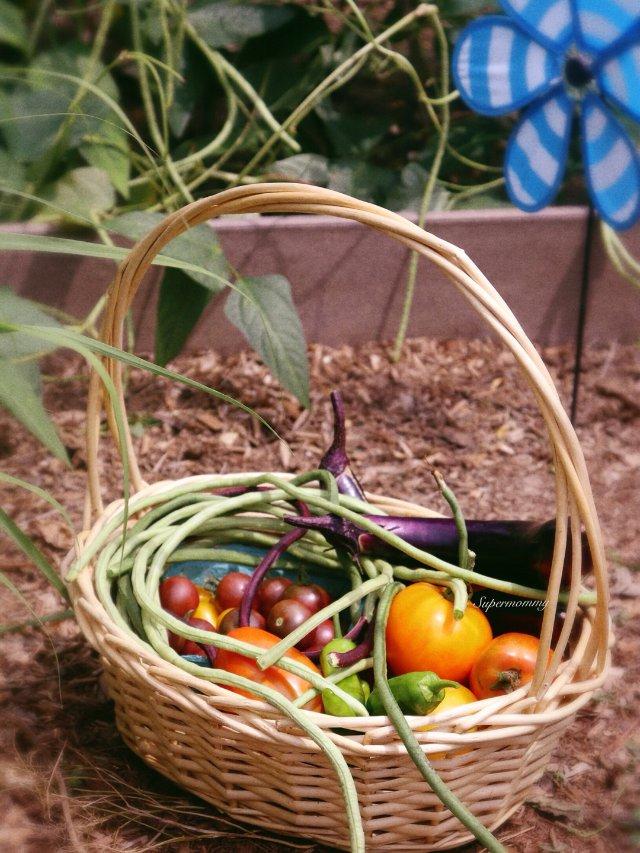 🌟我的菜园update🌟