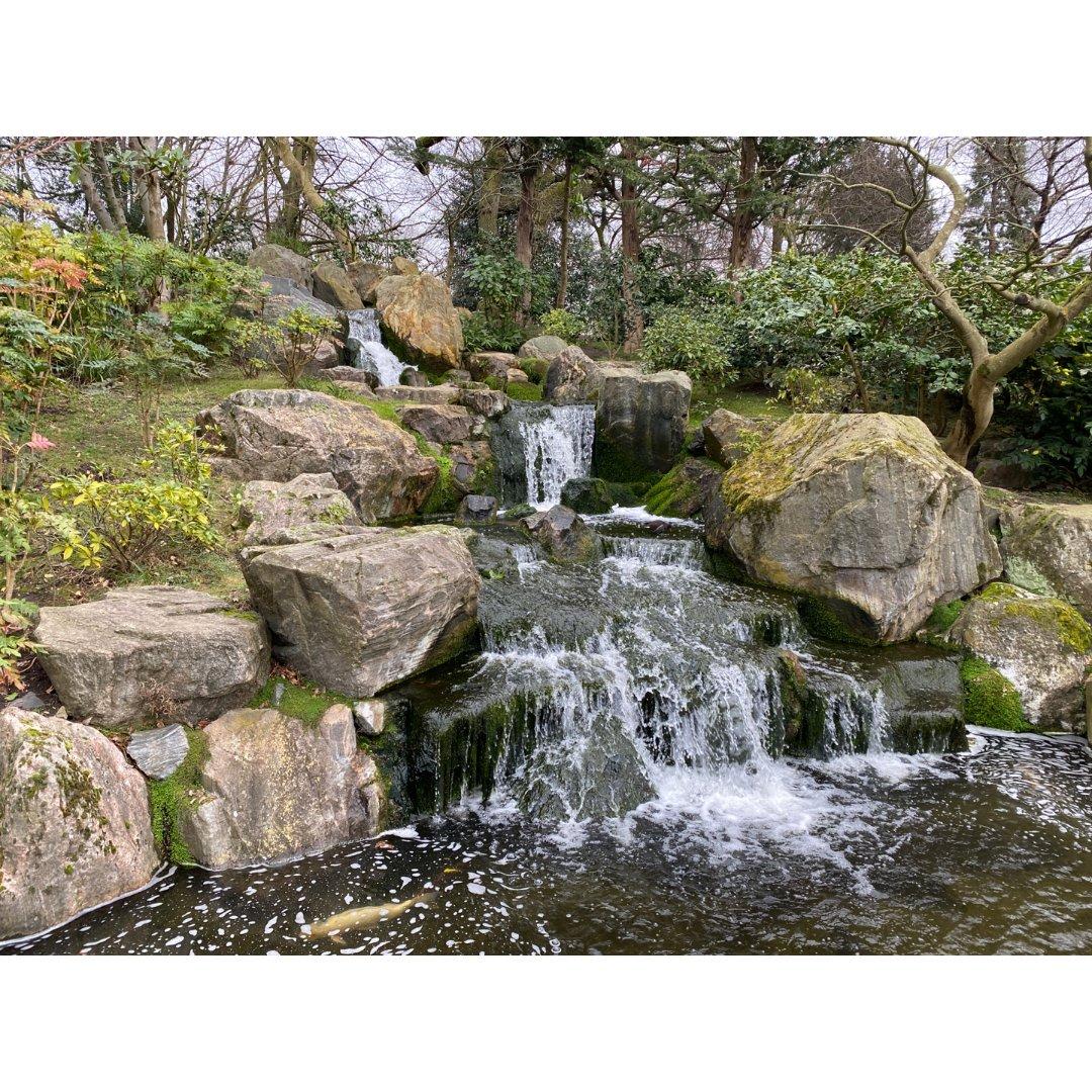 伦敦|Holland Park公园里的松...