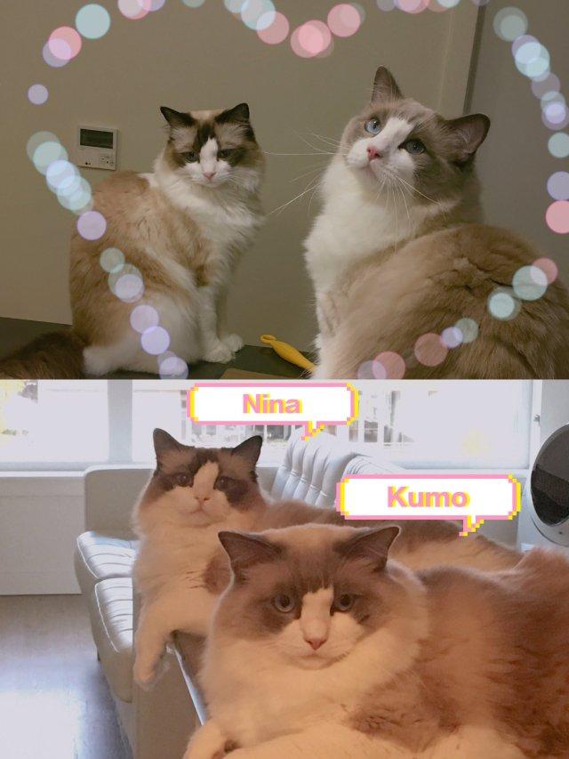 宠物 如何介绍新伙伴给家里的猫主子❓