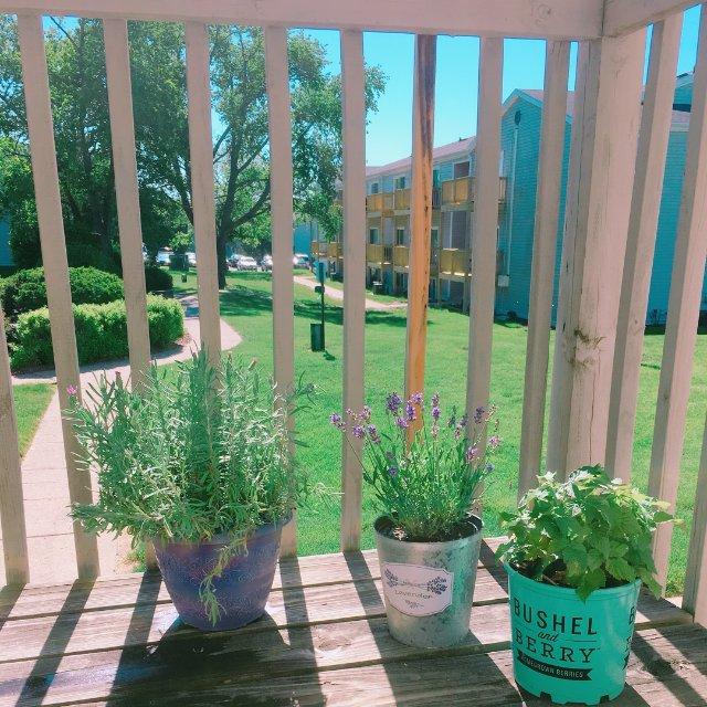 夏天到了心血来潮想要种点植物,不要...