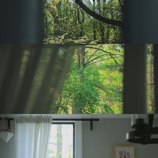 宅家四月 分享窗外...