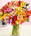 100 Peruvian Lily Blooms with Vase