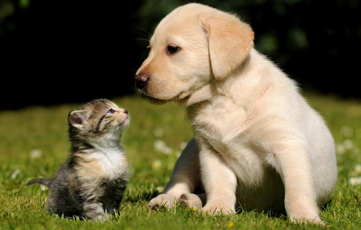 Up to $30 OffAll Items @ Only Natural Pet