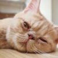 黑珍珠猫耳朵