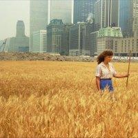 麦子与大厦
