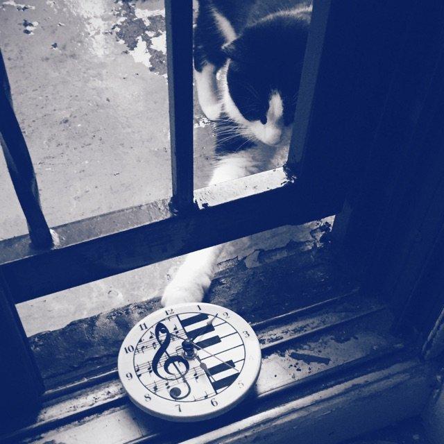 想要挂住时钟的猫。黑白钢琴键时钟在...