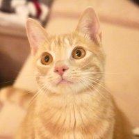 贝果是只小傻猫