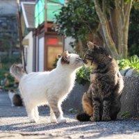 猫小仙Cloris