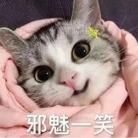 nanami酱