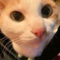 Miao28