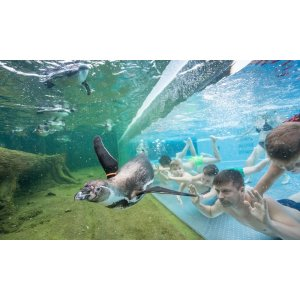 和企鹅共同遨游~Bad Lübbenau 的Spreewelten 企鹅世界 成人天票 原价31欧,折后只要21.5欧