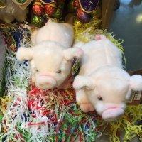 小猪猪特能吃