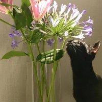 荔枝是只小黑猫