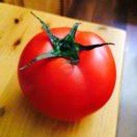 四月一日番茄君