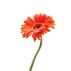 IKEA 75周年庆活动,每人送一个花还有5欧优惠券