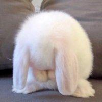 我不是兔兔