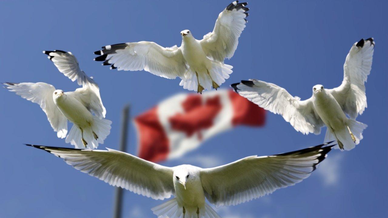 加拿大移民| EE 快速通道打分标准及申请步骤详解