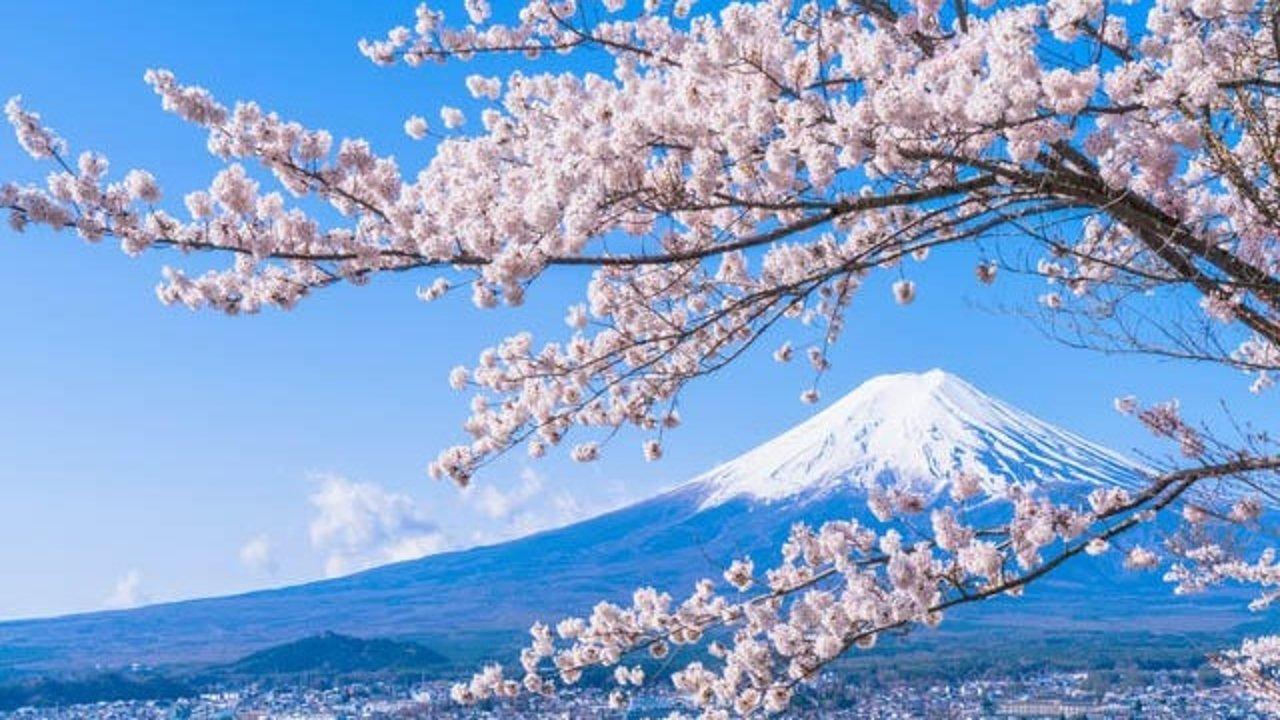 日本自由行如何办理旅游签证?日本签证简直不要太简单