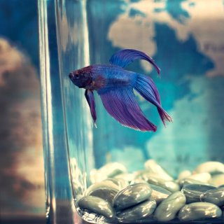 Up to 25% OffPetco Selected Aquarium Ornaments on Sale