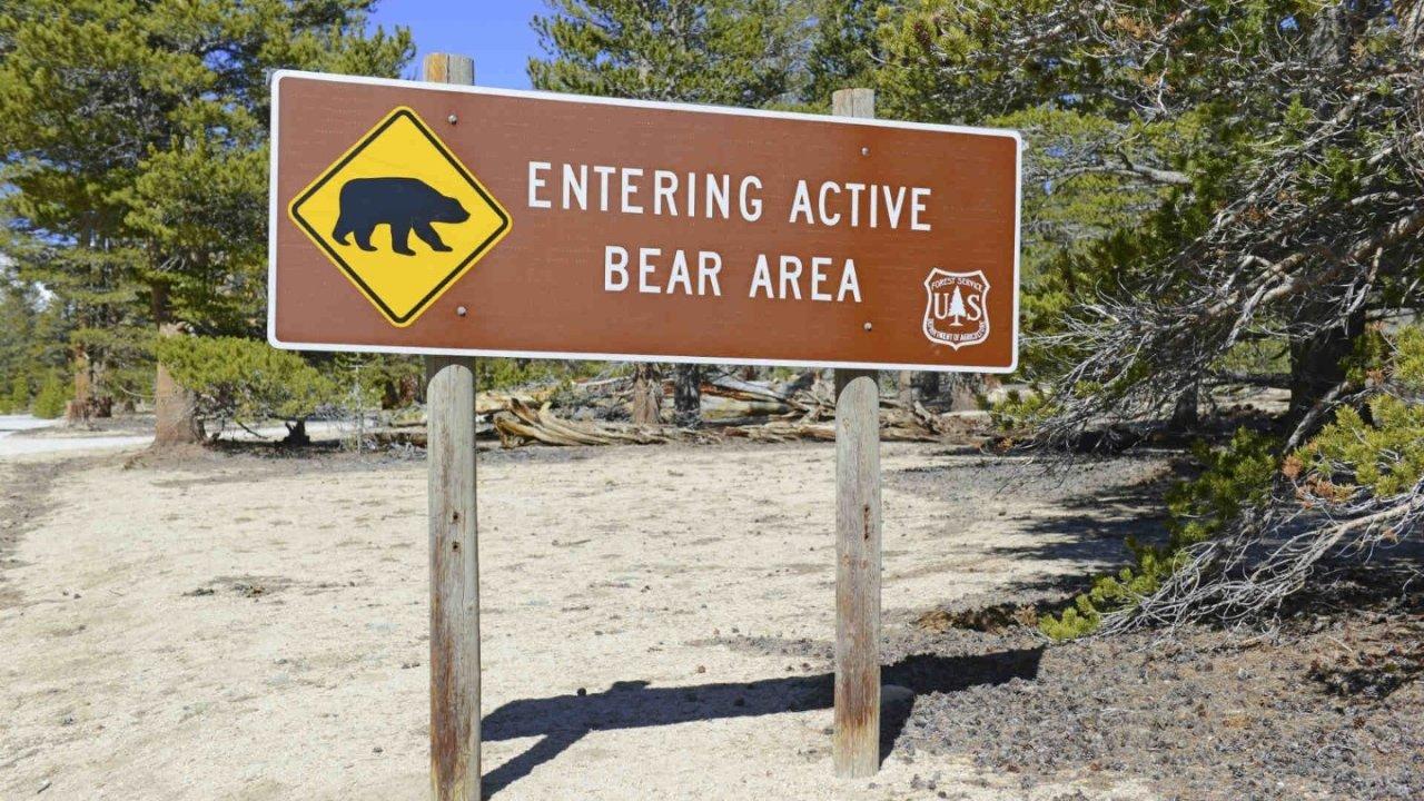 公园郊游遇上熊?遇猛兽这些自保方法才真靠谱