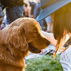 粉丝分享宠物疫苗经历Petco 宠物注射疫苗 无需预约 超级方便