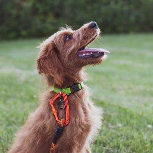 平均每周仅$20Petco 提供成年犬训练课程 小班制度