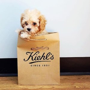 $154(价值$184)加赠$30礼品Kiehl's科颜氏 粉丝福利套装 均为正装产品