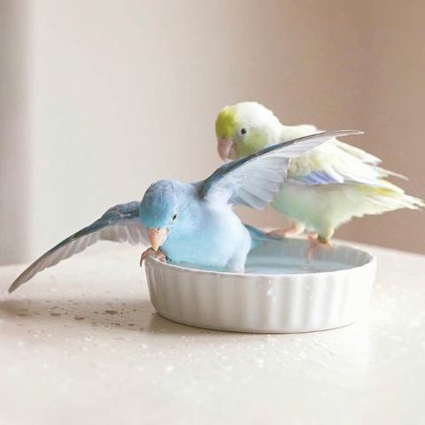In-Store SalePetco Live Birds