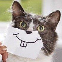 低至6.7折 + 额外7折Petco 精选猫咪洁牙小零食、用品等促销热卖