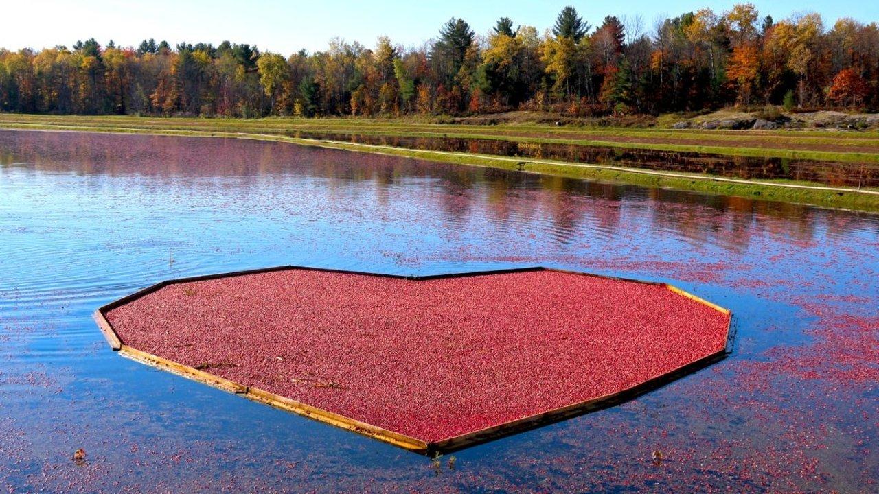多伦多周末好去处:白求恩故居及周边Muskoka蜜月湖、蔓越莓酒庄一日游攻略