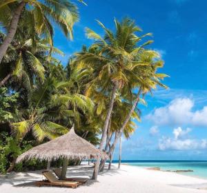 $1895起7天马尔代夫高级旅行套餐 即将消失的岛屿你一定要去一次
