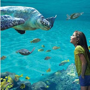 双园年票限时省$48 低至$9.9/月Sea World 圣地亚哥海洋世界门票夏日闪购