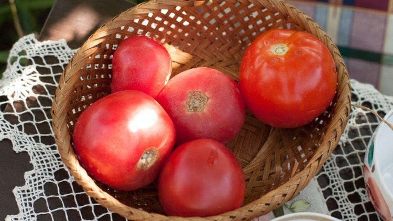 德国种菜指南   新手友好型蔬果推荐、种植方式介绍,小白也能做菜农