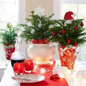 7折,$14.99起带来温馨圣诞气息Costa Farms 室内圣诞主题盆栽植物