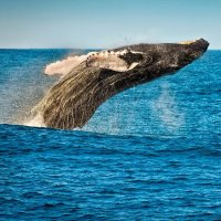 3小时观鲸海豚之旅