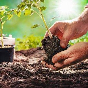 $7.99收中国有机韭菜种子5g春季种植:家乡蔬菜、水果、花卉种子热促 工具也备上