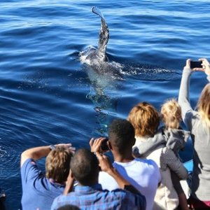 From $8Davey's Locker Wale Watching Cruise