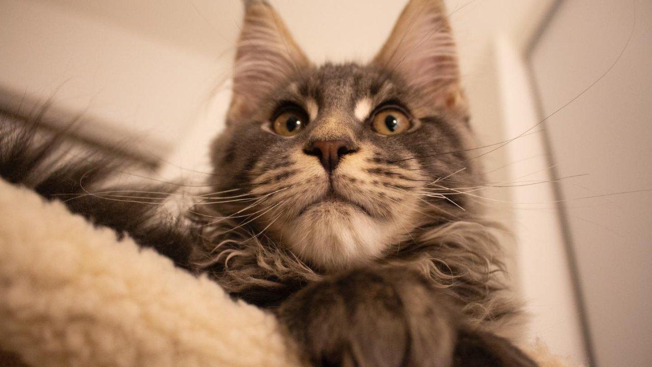 一个迎接猫猫的记录「02准备篇」