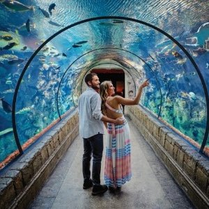 $14起 三岁以下儿童免费拉斯维加斯 鲨鱼礁水族馆门票  想和鲨鱼一起游玩?