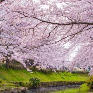 LulutripEastern Cities with Sakura and Falls Tour