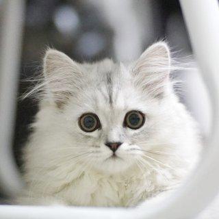 低至8.5折 + 满$85享额外8折Petco 全场猫咪零食大促销 低价入猫草