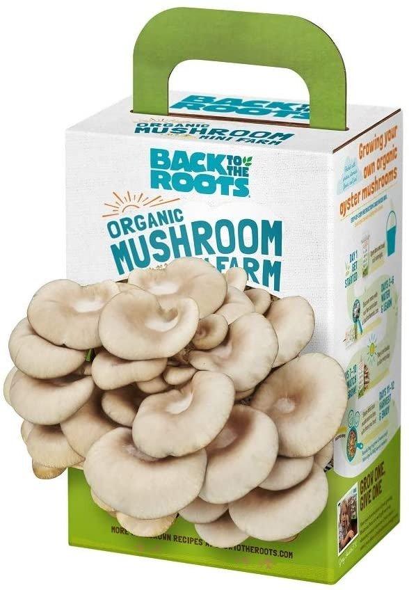 有机自发蘑菇套装