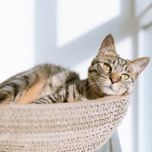 Up to 40% OffPetco Cat Trees & Towers on Sale